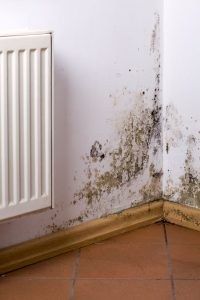 Mold can grow in your basement when there is moisture build up